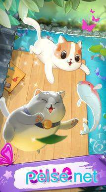 貓咪融合圖3