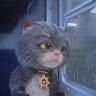斑布猫中秋回家吗动态壁纸