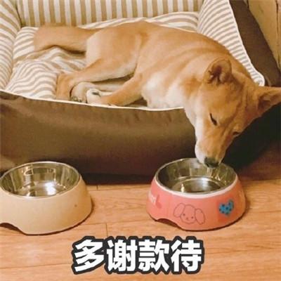 520单身狗专用带字表情包