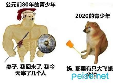 肌肉doge与小废狗表情包图1