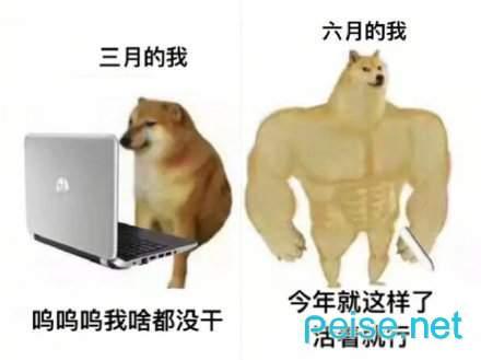 肌肉doge与小废狗表情包图2